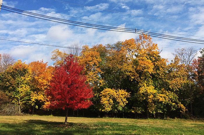 fall15-2