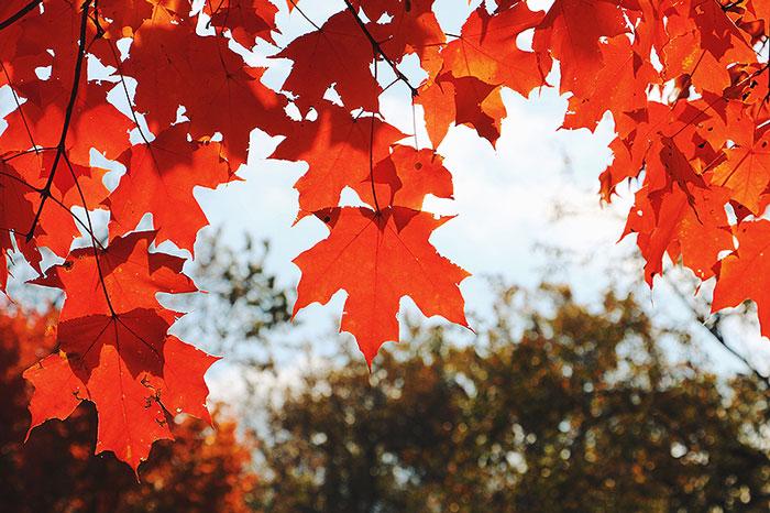 fall15-3