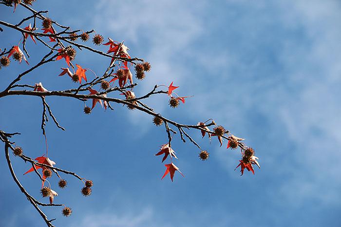 fall15-8